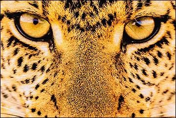 Motivational Tips - Tiger Eyes